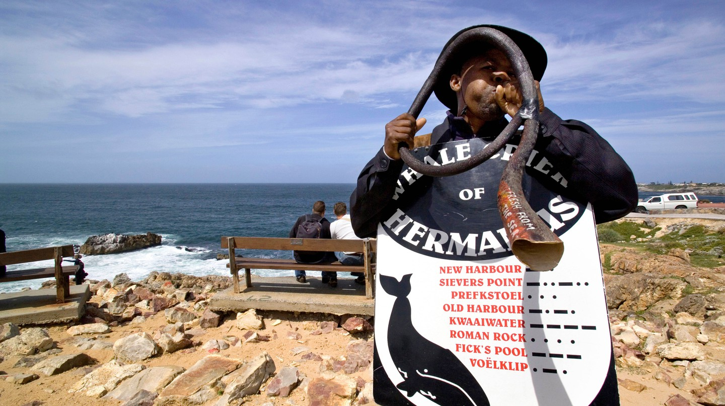 Whale Crier, Hermanus, South Africa