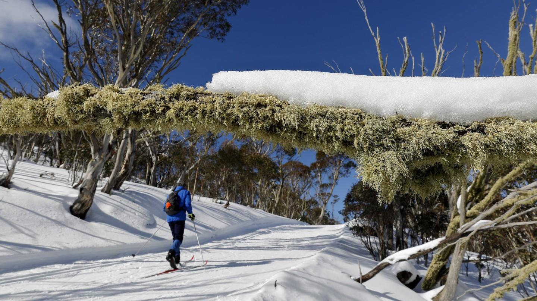 Cross-country skiing at Hotham