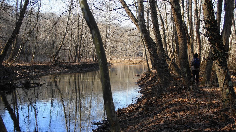 Bloomington Wetlands