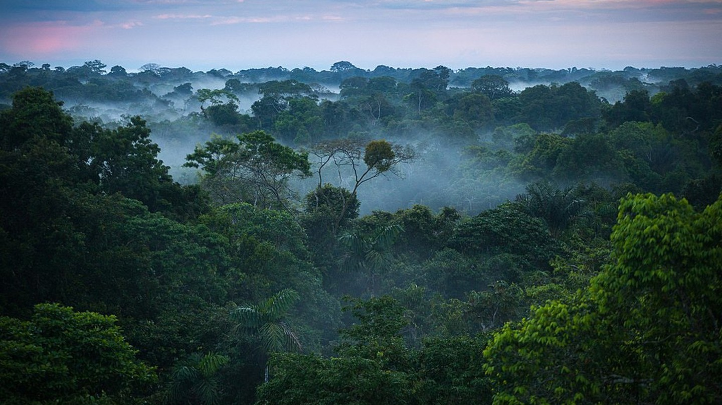 The Amazon rainforest is home to some of the world's most complex and fascinating ecosystems