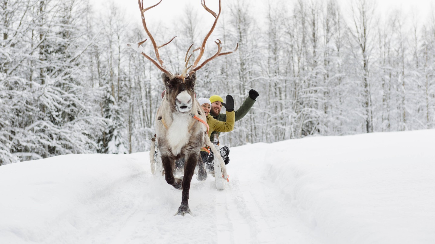 Reindeer safaris are one of the best tours to take in Finland.