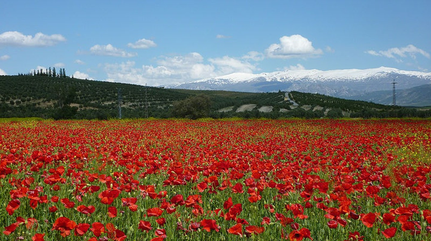 Spring in Spain's Sierra Nevada natural park
