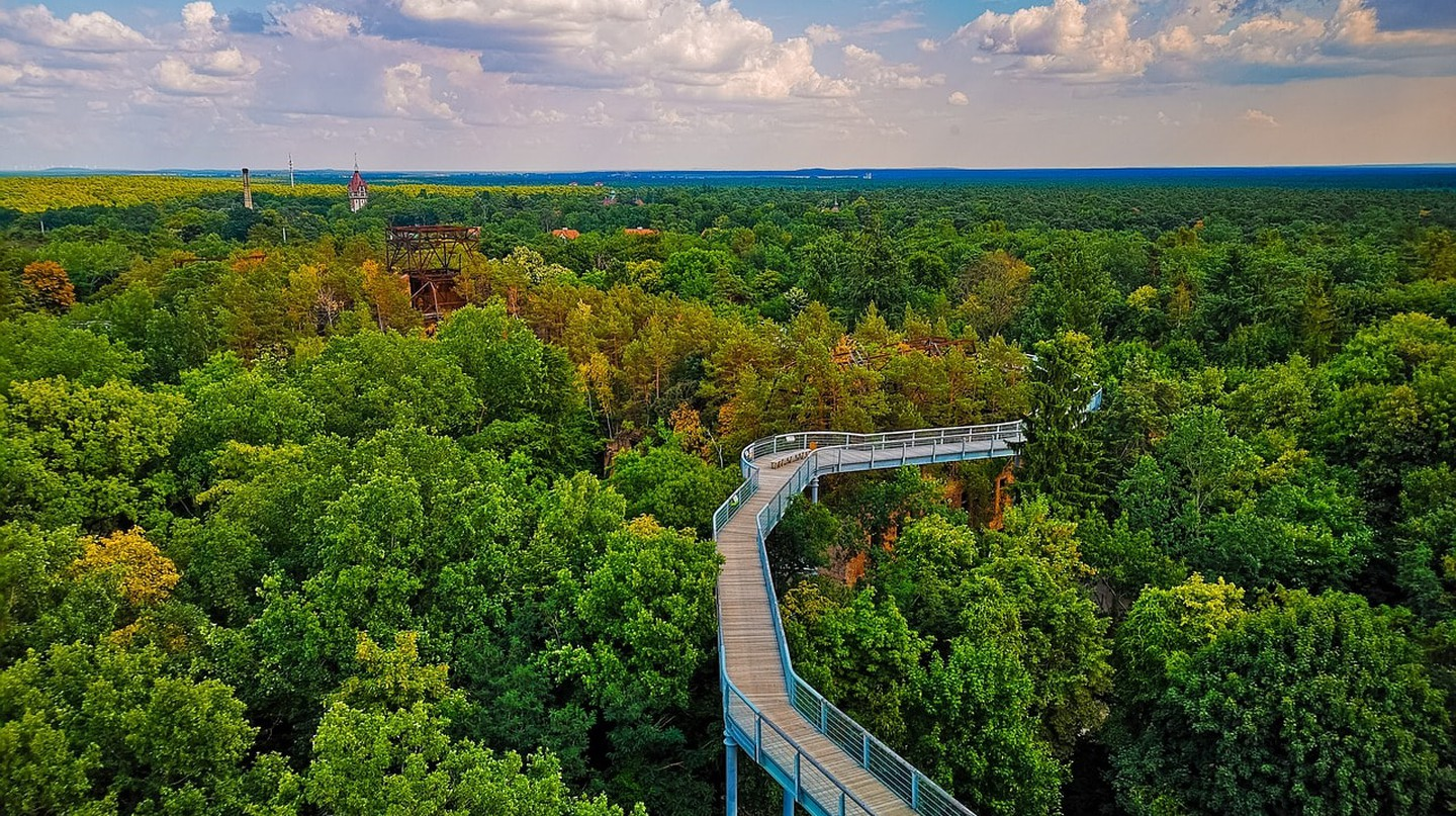The Beelitz canopy walk from above