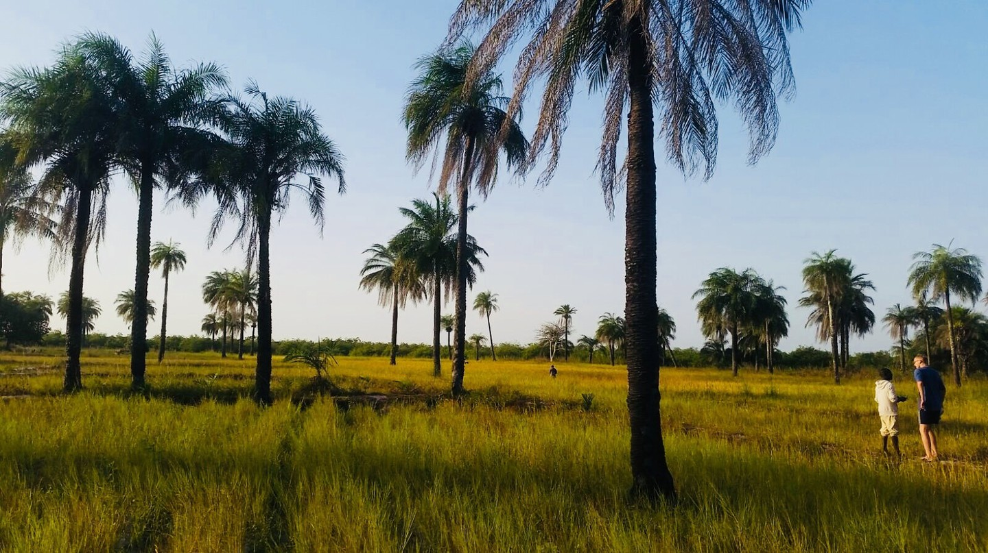 Rice fields in Basse-Casamance