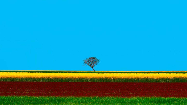 Vojvodina Fields In Spring