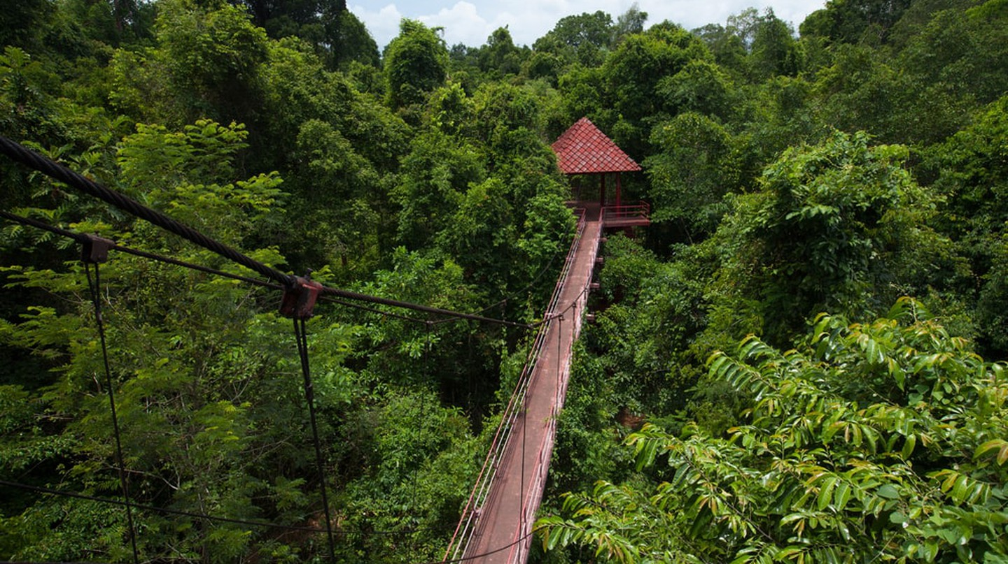 Try the canopy walks in Danum Valley