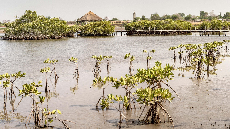 Souimanga Lodge, Fimela Sine, Saloum Delta, Senegal