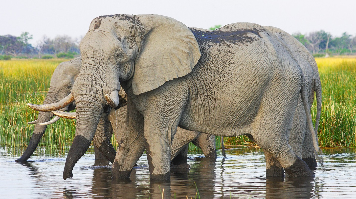 Elephants are one of the main tourists attractions