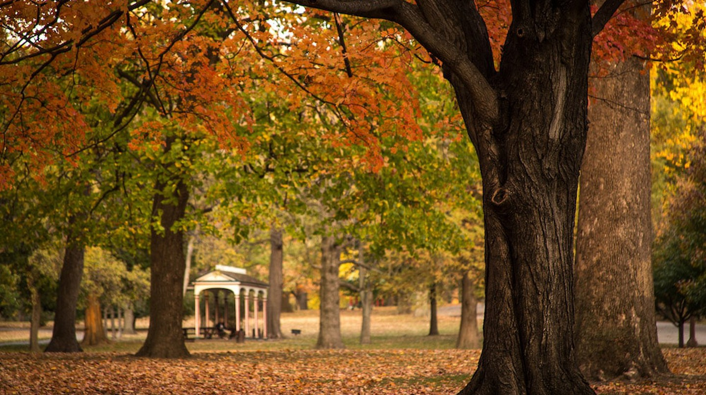 Tower Grove Park has more than 7,000 trees that turn beautiful colors in the fall