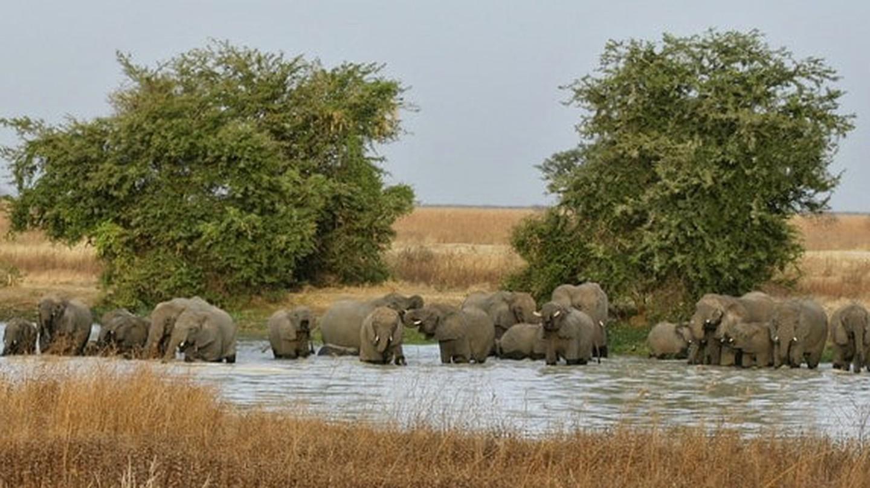Elephants at Waza Park