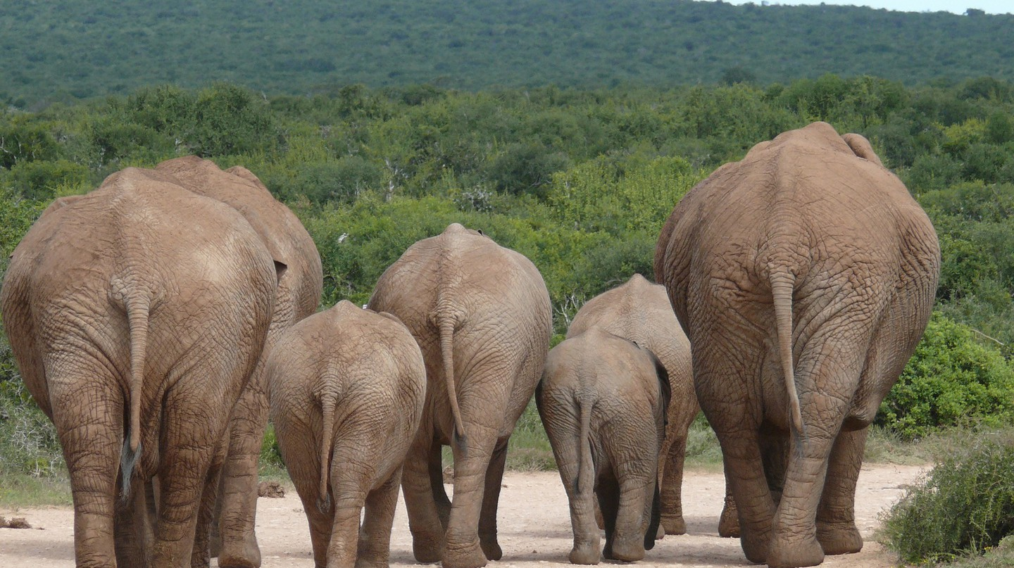 Elephants in Namibia play an important role in local mythology
