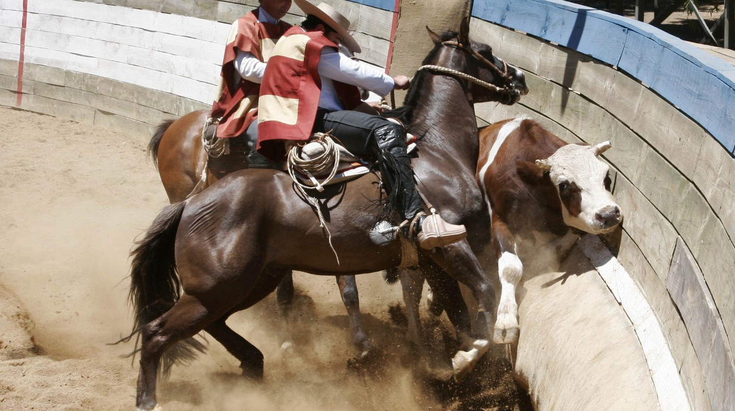 Animal activists  object to the rodeo tradition in Chile