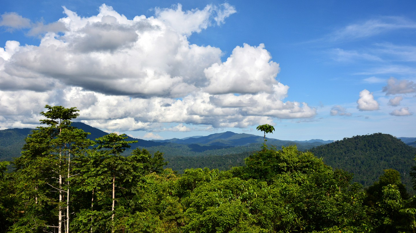 Tropical rainforest of Danum Valley