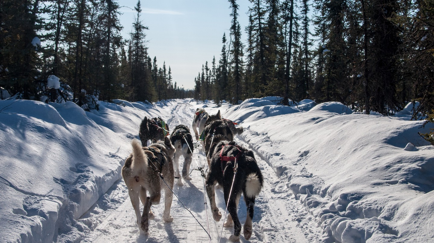 View from dog sled and sled dog team, Alaska