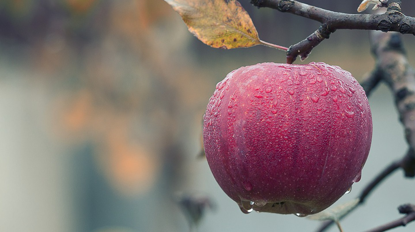 A ripe apple in fall