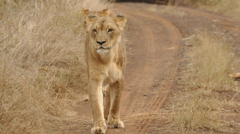 Safari sights in Hlane National Park