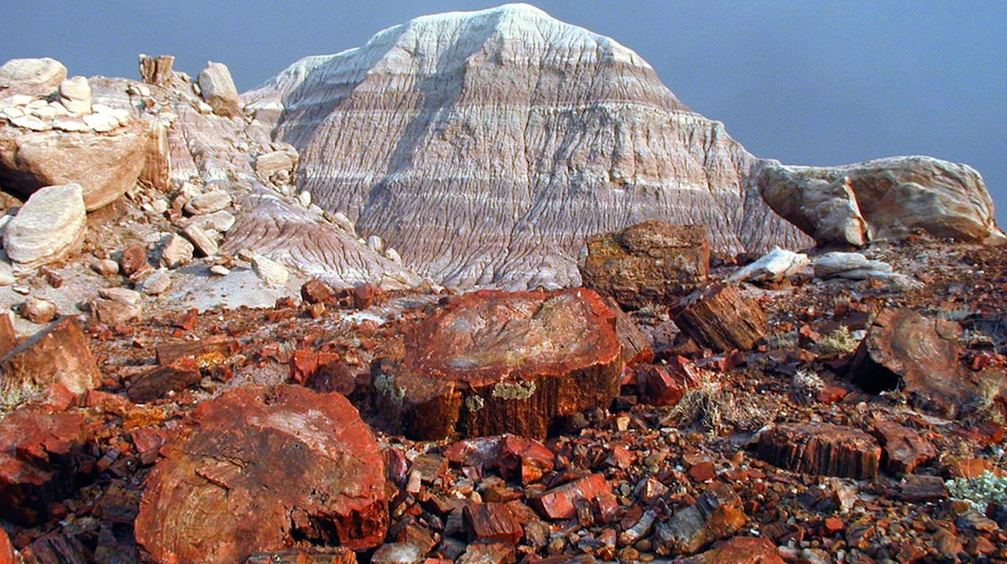 Fossilized logs share landscape with colorful badlands at Petrified Forest National Park