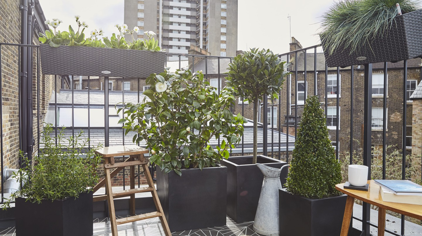 Urban Jungle: The Rise of Mindful Gardening in London