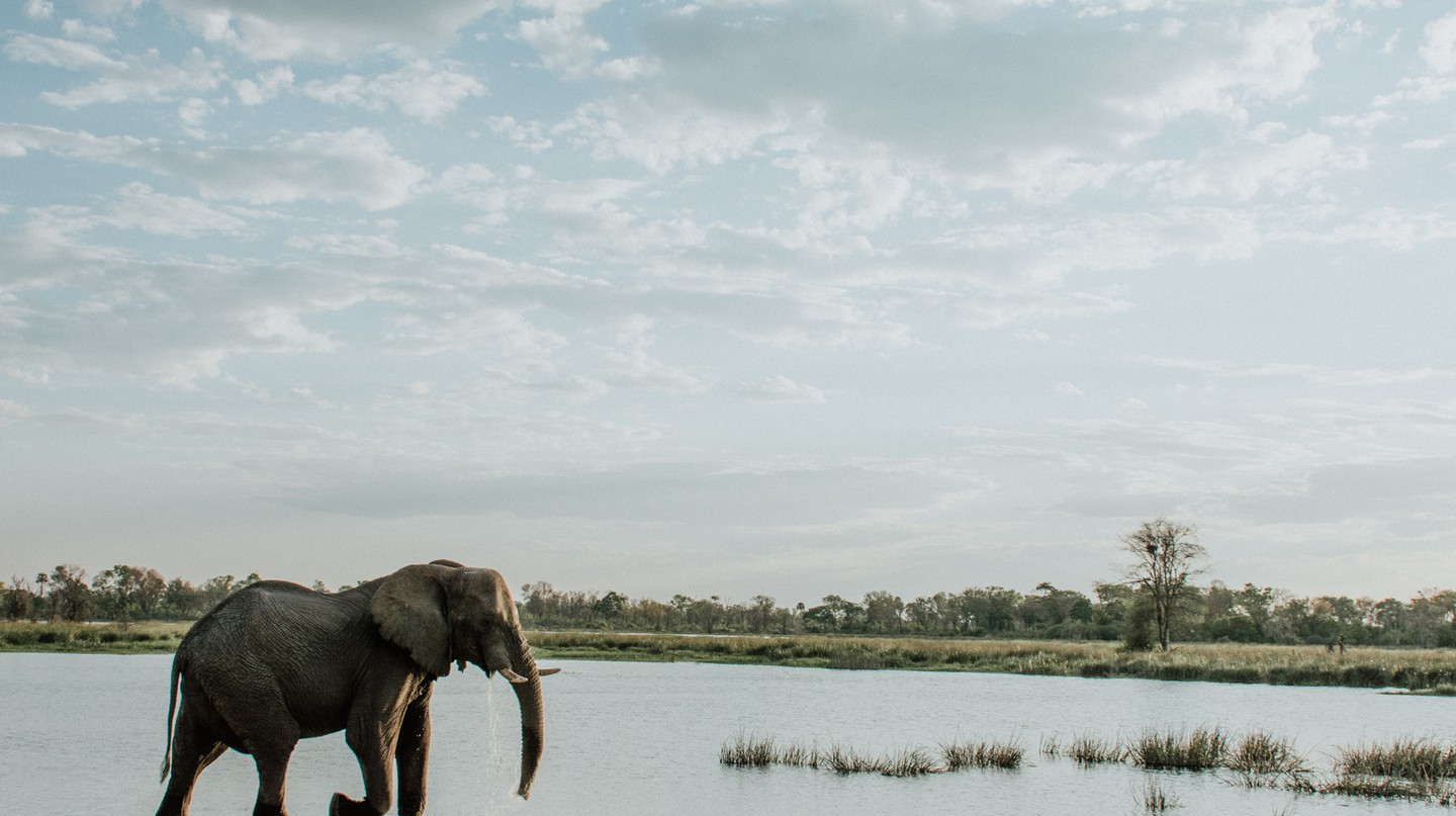 Botswana is an incredible place to visit, even during the rainy season