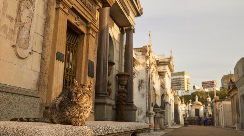 La Recoleta Cemetery is home to dozens of cats