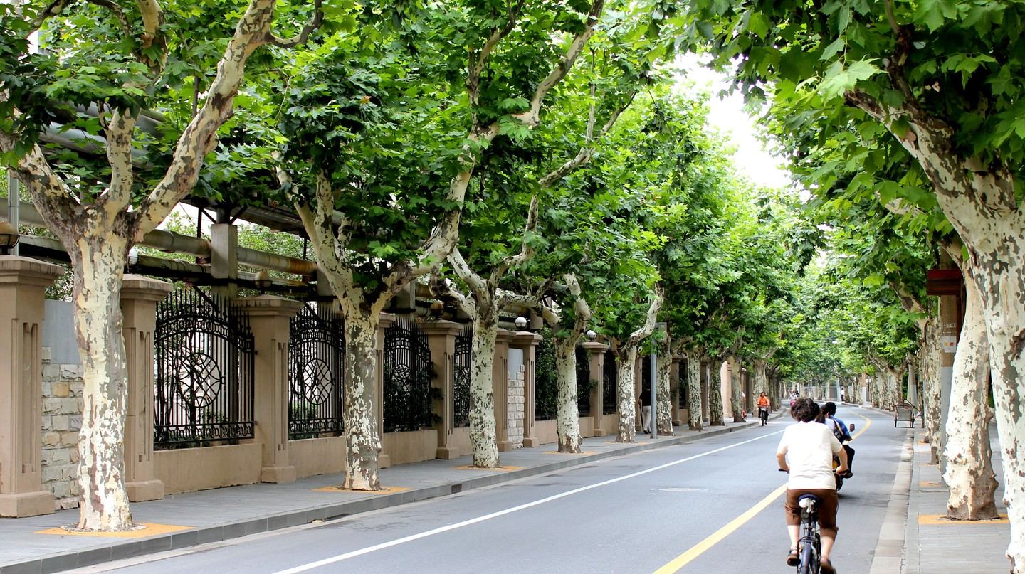 The streets in Shanghai's former French Concession are lined with trees