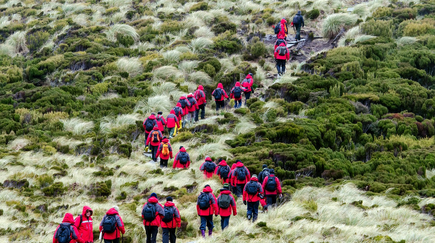 Tourists hike on Campbell Island in New Zealand