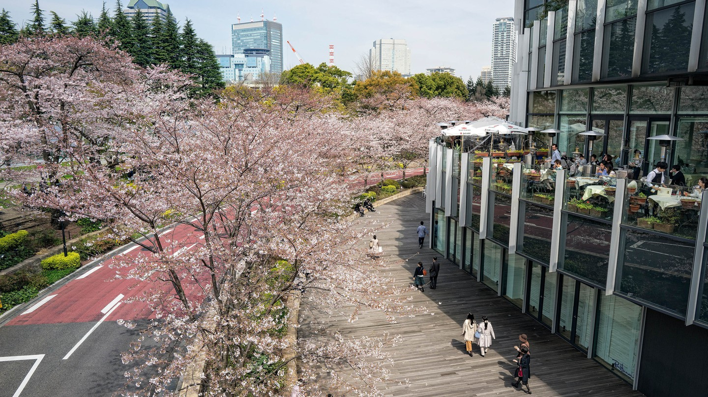 Midtown Roppongi district in spring, Tokyo, Japan.