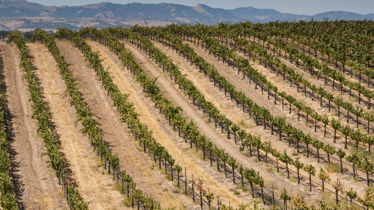 LA County is in the midst of a revival as a preeminent wine region in California