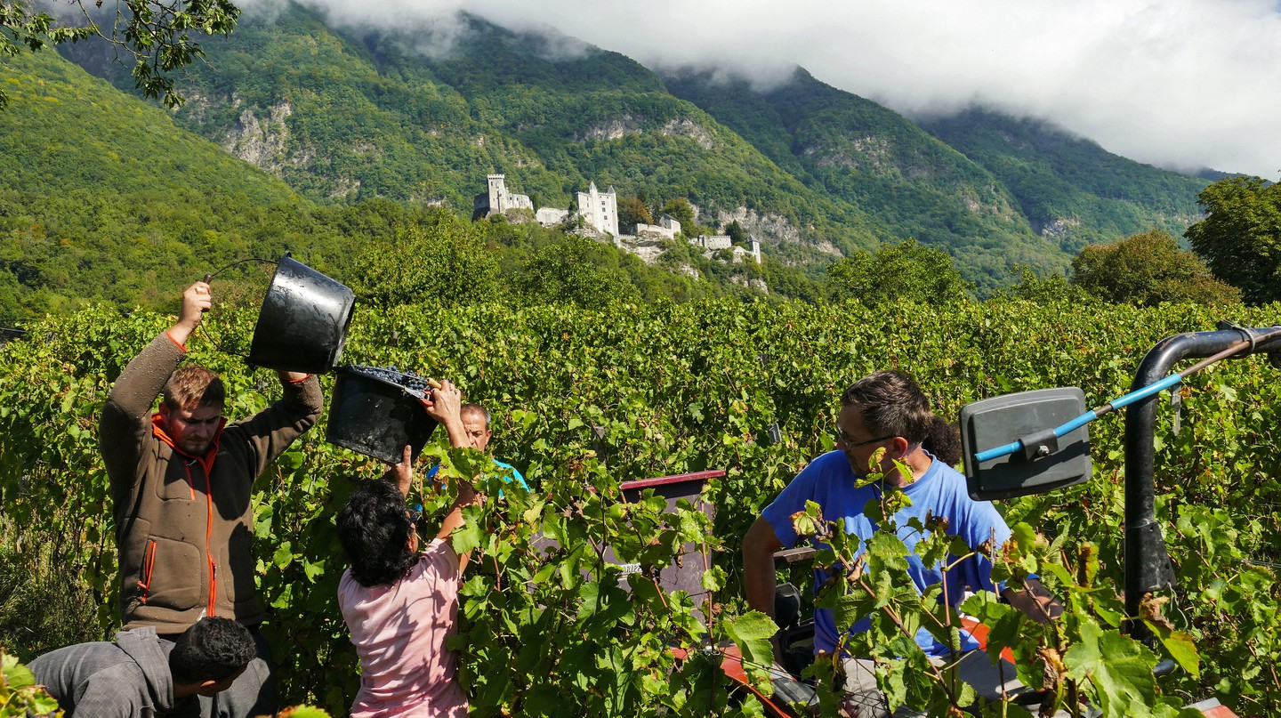A new generation of Beaujolais winemakers are doing things differently