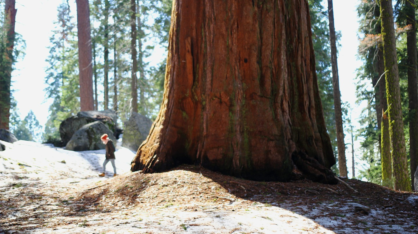 Sequoia National Park is home to some of the largest trees in the world