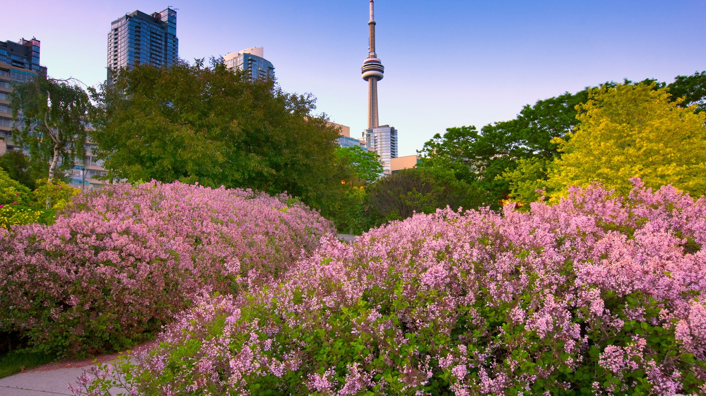 Toronto is full of expansive and unusual parks, including the spectacular Toronto Music Garden