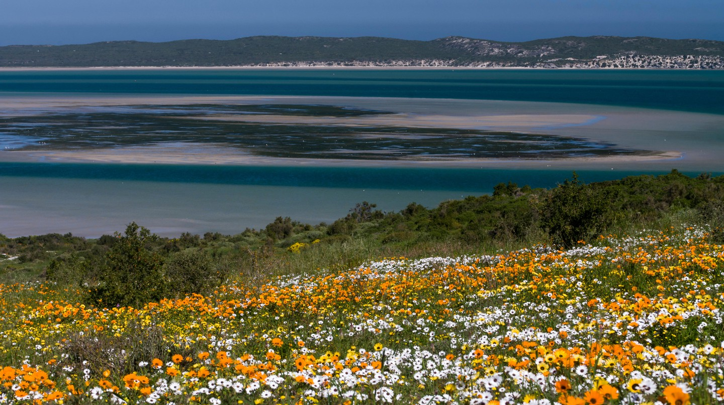 Cape Town is filled with peaceful places in which to unwind – like the flower meadow at West Coast National Park, part of the Cape Floristic Region
