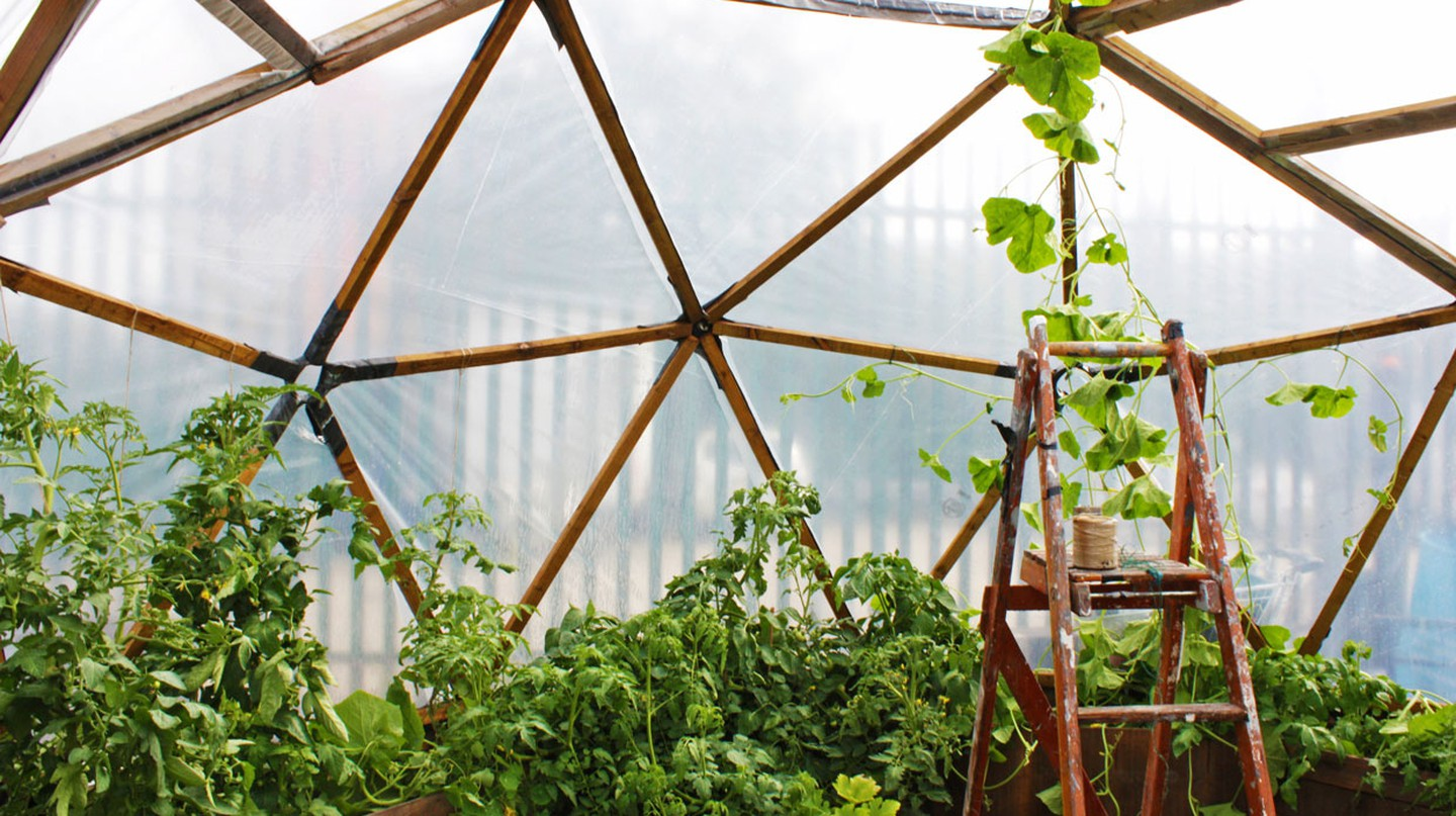 Grow Tottenham is just one of the green spaces springing up around the capital