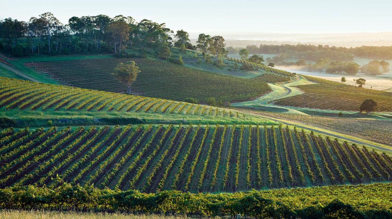 Organic and Biodynamic Vineyards in the Hunter Valley, NSW Australia