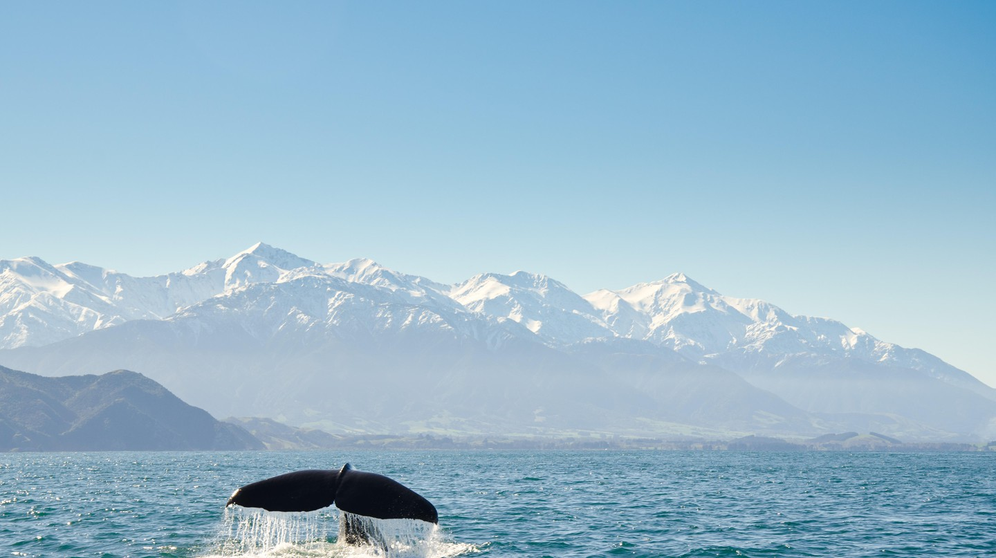 Kaikoura is home to some of the world's most amazing wildlife