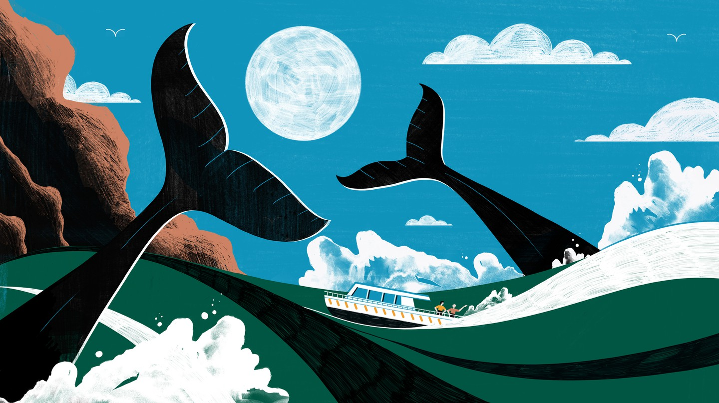 How a Friendship Between a Man and a Whale Changed Ocean Tourism in Mexico