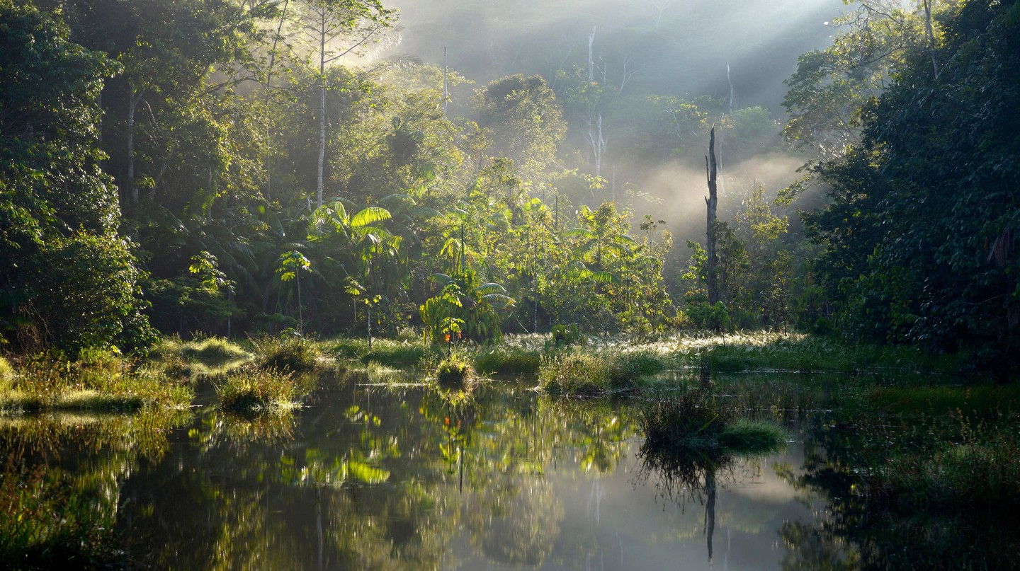 Small lake in the morning light, Amazon rainforest between Itaituba and Pimental, Para, Brazil