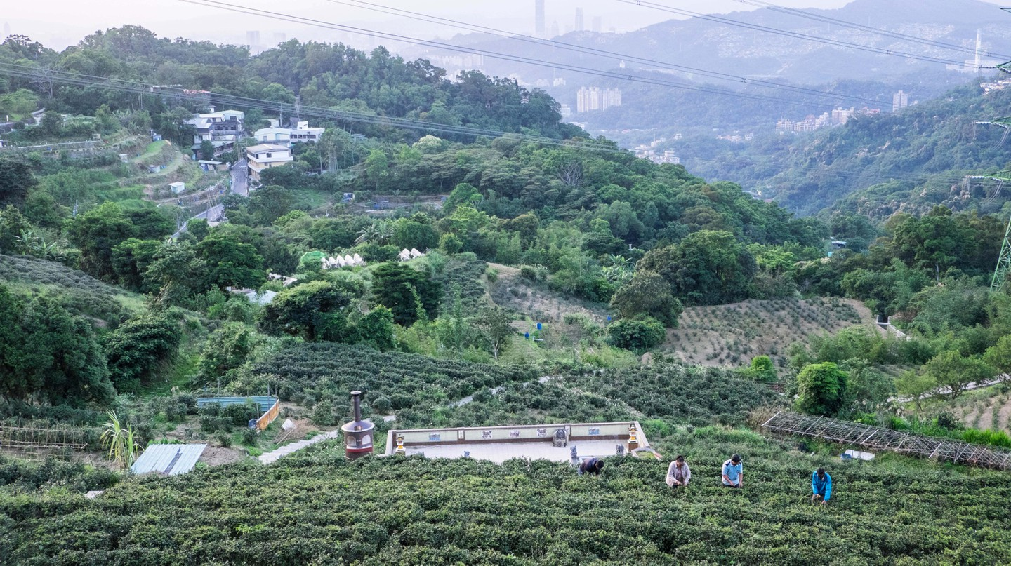 Maokong, with its tea plantations and forest canopy, is the place to be if you love tea and trails