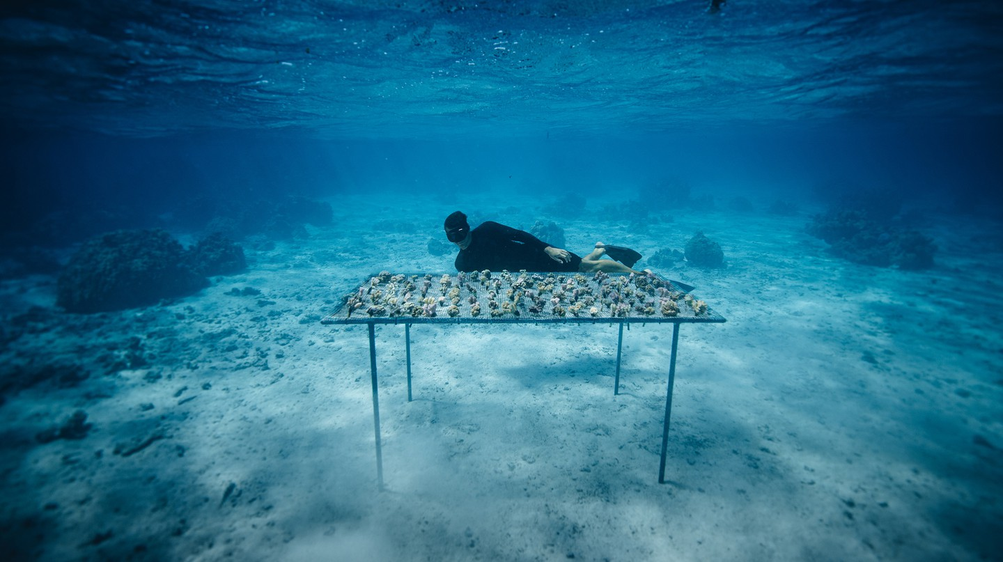 The Coral Gardeners are working to help counteract the damage caused to the oceans by rising sea temperatures
