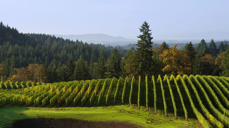 Get wines from Alexana Winery in Oregon delivered to your door