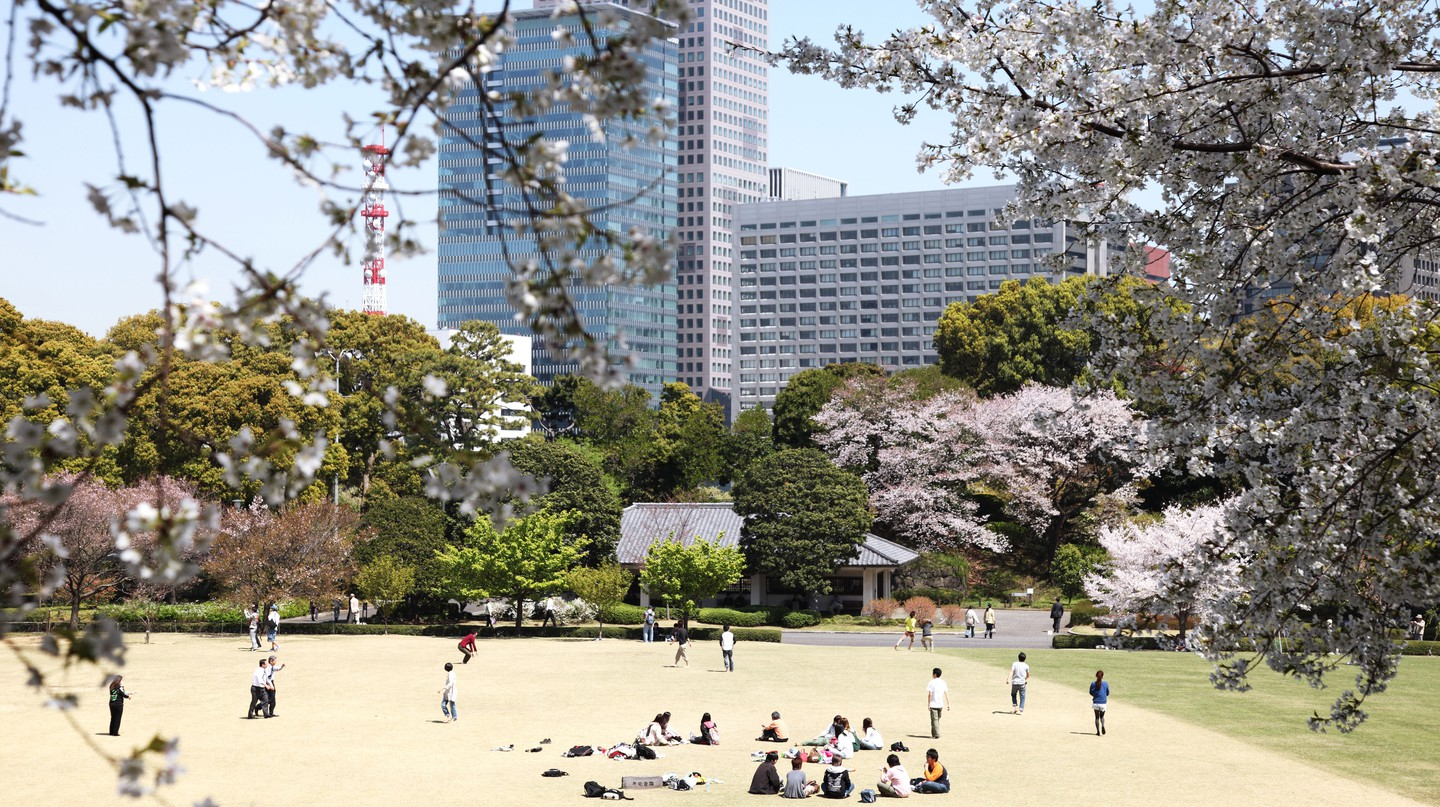 Tokyo's Imperial Palace East Garden is a popular spot for viewing cherry blossoms
