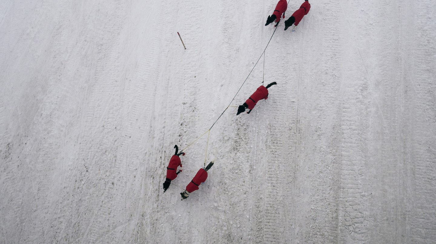 Aerial view of dogs during the Finnmarkslopet Race in Norway