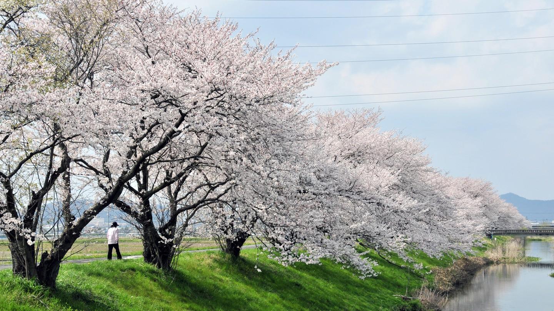 Walk through nature in Nagoya