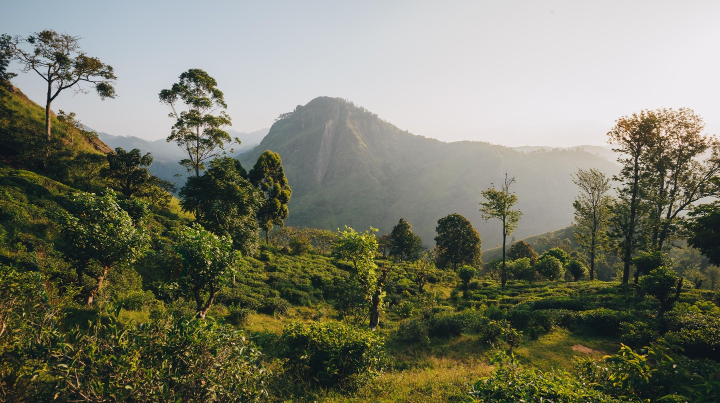 Bring the sights of Sri Lanka to the comfort of your own living room