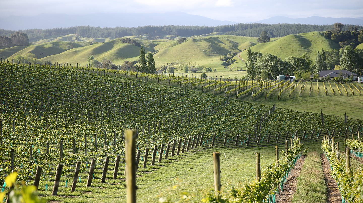 New Zealand is considered to have the most contrasting geography in any major wine-growing country