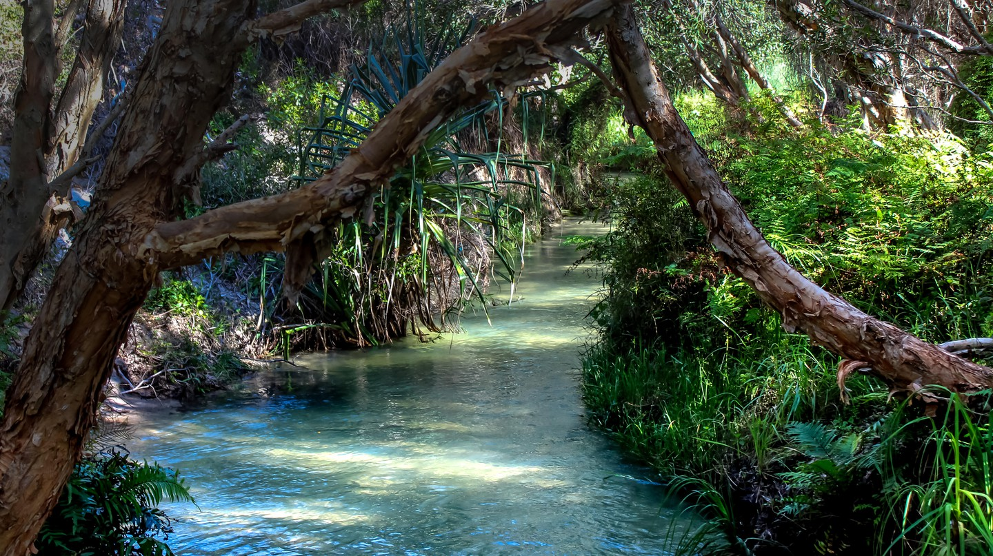 19 Incredible Freshwater Springs in Florida