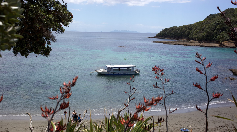 Goat Island is renowned for its abundant marine life