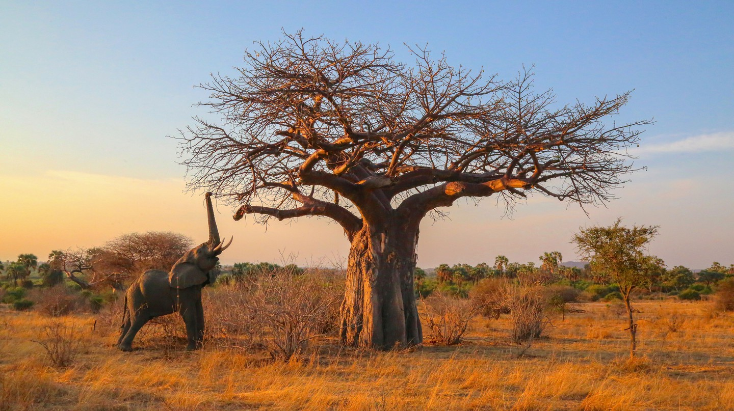 The 'New Big 5' project aims to celebrate and protect wildlife