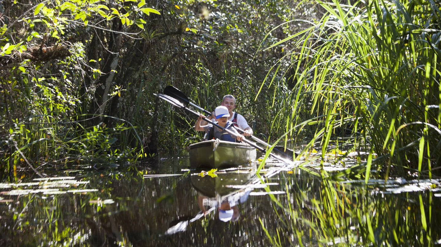 Canoe through mangroves in Florida's backcountry for an adventure like no other