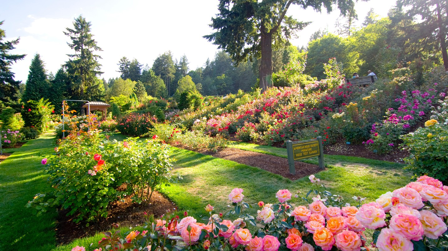 Portland is known for its roses